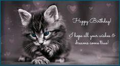 Cute litlle happy birthday kitten 🐱