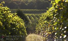 Travel MO Wine Country - Wine-tineraries make planning your visit to the vineyards of Missouri simple and stress-free!