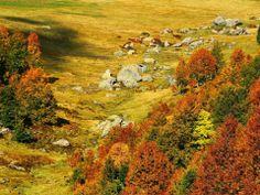 Mountains of Abkhazia