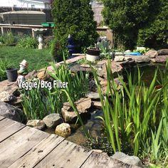 1000 images about pond on pinterest garden ponds ponds for Pond veggie filter