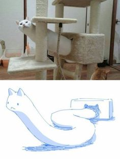 FunSubstance - Funny pics, memes and trending stories Funny Animal Memes, Cute Funny Animals, Funny Animal Pictures, Cat Memes, Funny Cute, Haha Funny, Best Funny Pictures, Funny Memes, Funniest Photos