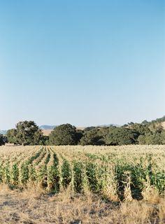 Root's Farm in Santa Ynez Valley
