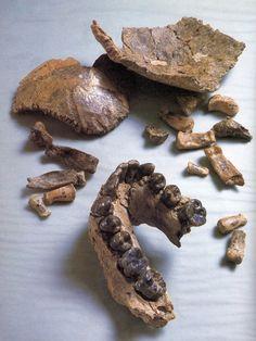 Homo habilis en la Unidad de Cuidados Intensivos | Reflexiones de un primate