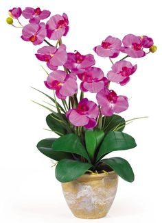 Double Phalaenopsis Orchid Silk Plant in 8 colors | 25 inches