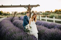 Lavender Farm Wedding - I would get married in a lavendar field in a heartbeat #annacampbell #bridetobe