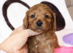 cute! a homeless dog.