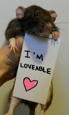 I love rats!!!!!! Proud to be a rat owner <3