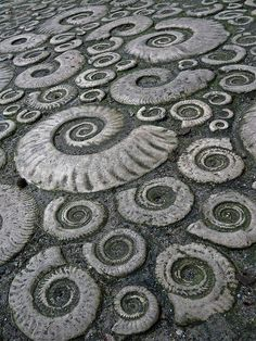 On either side of Lyme Regis, England but especially to the west on Monmouth beach, visitors can see a  layer of limestone famous for the large Ammonites it contains, known as the Ammonite graveyard or the Ammonite pavement.