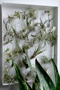 The Botanical Cubicle: Desktop Gardening for Beginners | The Sill on All Hands