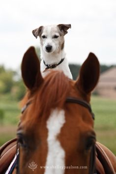 *can't get better than this a JRT and a horse !!
