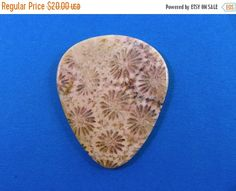 Black Friday Week Sale Indonesian fossilized coral by HawkeyePicks