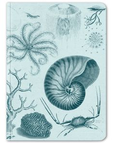The Hypothesis Large Hardcover Notebook Here's an aqua blue notebook for sunny days in a rowboat, afternoons on the grassy shore, and biology lab – anywhere you spend time musing on shallow seas and t
