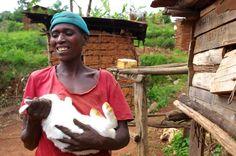 Rabbits: Cute, Cuddly, and Capable of Feeding Villages - http://modernfarmer.com/2016/01/rabbit-breeding-center-uganda/?utm_source=PN&utm_medium=Pinterest&utm_campaign=SNAP%2Bfrom%2BModern+Farmer