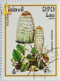 Shaggy ink cap, Lao, Laos, stamp, mushroom