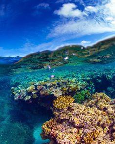 The Great Barrier Reef in Australia #takemeaway #travel #Australia #cairns #melbourne #travelgram #instatravel #ocean #fish #reef #greatbarrierreef #love #live #laugh #explore #adventure #summer #happy #l4l #f4f #instafollow #followme #follow4follow #followforfollow by traveldom_ http://ift.tt/1UokkV2
