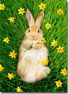 Bunny In Daffodils Easter Card - Greeting Card by Avanti Press Farm Animals, Animals And Pets, Funny Animals, Cute Animals, Baby Bunnies, Cute Bunny, Adorable Bunnies, Bunny Bunny, Bunny Rabbits