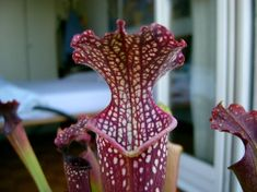 tradescantia kamerplanten verzorging planten bloemen