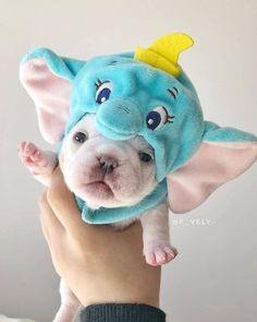 Cute French bulldog puppy - Cute Animals - #animals #bulldog #Cute #French #pupp... - #Animals #Bulldog #Cute #French #Pupp #Puppy
