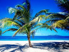 Playas de Cancún. Eligiendo lugares espectaculares tenemos las maravillosas playas paradisiacas. podemos disfrutar tanto de las actividades acuaticas, como de una maravillosa puesta de sol, una velada romantica en la orilla del mar, o un simple paseo bajo la luz de la luna. vistas magnificas, aguas cristalinas, naturaleza,¿qué más se puede pedir?