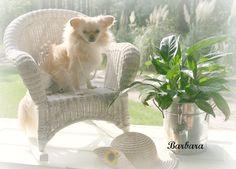 My dog Mandi...by Barbara