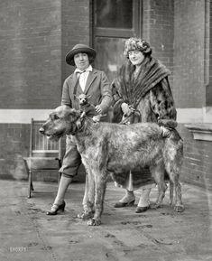 Irish wolfhound with tiny friend. Image courtesy of Shorpy Historical Photo Archive.