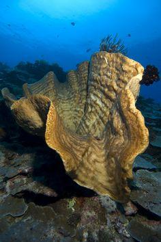 Nusalaut Scuba Diving Maluku Islands, Scuba Diving, Roots, Sweet, Water, Outdoor, Diving, Candy, Gripe Water