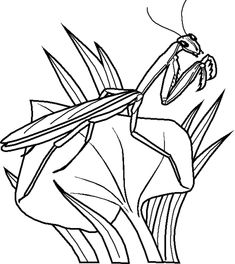 (^_^) Insect Coloring Pages Free Coloring Pages For Kidsfree Coloring