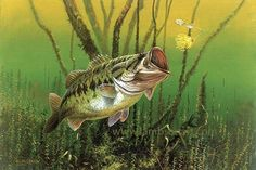 Bass Fishing Pictures, Bass Fishing Tips, Fly Fishing, Fishing Shirts, Wildlife Paintings, Wildlife Art, Fish Paintings, Deer Sketch, Cool Fish