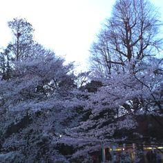 Ibokashira park