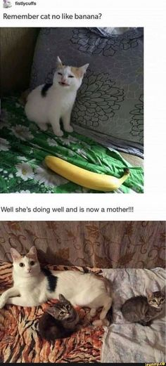 Cute Kittens And Mom Cat Of Funnycatsandnicefish Cute Cats Eating Watermelon Funny Animal Memes, Cute Funny Animals, Funny Animal Pictures, Cute Baby Animals, Funny Cute, Animals And Pets, Cute Cats, Random Pictures, Funny Pics
