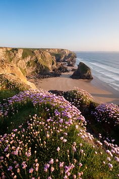 love the flowers in the front of the photo with the ocean in the background