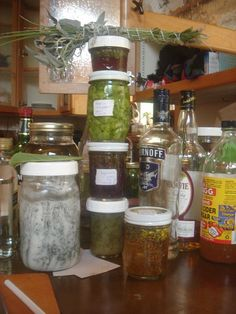 Medicine Making Party at Kitchen Witch    Violet Folklore Blog     Herbs and sprouts, bushes and trees...all provide us with what we need. So, why don't we look there instead of a pharmacy?