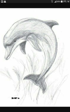 Animal Drawings Images For > Pencil Drawings Of Dolphins Art Drawings Sketches Simple, Pencil Art Drawings, Realistic Drawings, Animal Drawings, Easy Drawings, Pencil Sketches Of Animals, Drawing Ideas, Animal Sketches Easy, Pencil Drawing Tutorials
