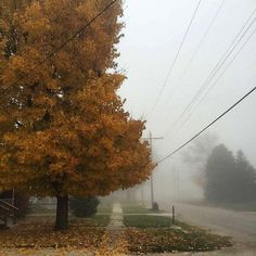 """""""All the #trees are losing their #leaves & not one of them are #worried """" Don Miller #quote #fall #autumn"""