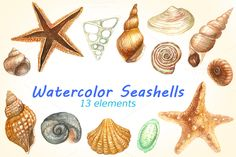 Watercolor Seashells Pack by Your Graphic Store on @creativemarket