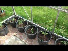 Den optimale måde at dyrke grøntsager i drivhus.. - YouTube