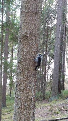 Repovesi National Park (Kouvola) Helsinki, Finland, Trip Advisor, National Parks, Photos, Pictures