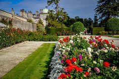 Roses in bloom inside the Wall Garden at the Powerscourt Estate near Dublin, Ireland.