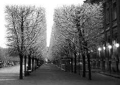 Black and white trees in a row <3