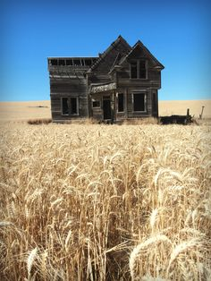 adiethelm: Fields of Straw. Abandoned Houses, Abandoned Places, Gothic Landscape, American Gothic, Southern Gothic, House Doors, Beautiful Scenery, Cozy House, Fields