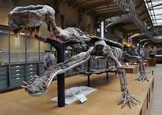 Sarcosuchus was by far the biggest crocodile that ever lived, making modern crocs, caimans and gators look like insignificant geckos by comparison. On the following slides, you'll discover 10 fascinating Sarcosuchus facts.