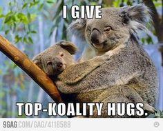 "Koala is a cute Australian animal, reminding the teddy bear. Many even call it "" Koala bear"" , but this is incorrect, because the koala. Koala Meme, Funny Koala, Funny Pets, Bear Pictures, Funny Animal Pictures, Adorable Pictures, Baby Animals, Funny Animals, Cute Animals"