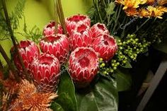 Картинки по запросу цветы протеи