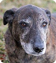 5/21/16 San Antonio, TX - Shepherd (Unknown Type)/Hound (Unknown Type) Mix. Meet Scribbles, a dog for adoption. http://www.adoptapet.com/pet/15028475-san-antonio-texas-shepherd-unknown-type-mix
