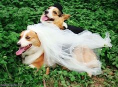 Funny Naughty Dog Pictures | Funny Picture Of A Dog | Funny Pictures Of Cute Dogs