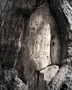 Ritva Kovalainen & Sanni Seppo: Sarjasta Karsikko / From the series Karsikko Finland Tree People, Finland, Mythology, Woods, Oc, Trees, Action, Traditional, Country