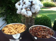 Southern cocktail hour and cotton centerpiece