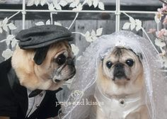 Oliver and Gretta de Pug wedding march 2013 by pugs and kisses for  blog