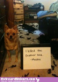 Dog Shaming features the most hilarious, most shameful, and never-before-seen doggie misdeeds. Join us by sharing in the shaming and laughing as Dog Shaming reminds us that unconditional love goes both ways. Funny Animal Photos, Dog Pictures, Funny Animals, Cute Animals, Animal Pics, Awkward Animals, Animal Fun, Funny Pictures, Funny Cute