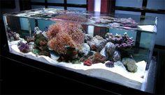 Unique Aquariums | UDO MAG